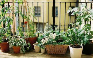 Πότε είναι η κατάλληλη εποχή για να ξεκινήσω να βγάζω τα φυτά εσωτερικού χώρου στη βεράντα μου;