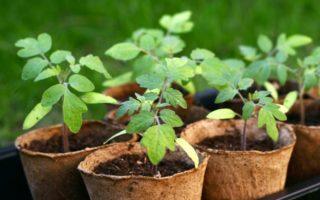 Οικολογικοί τρόποι φυτοπροστασίας