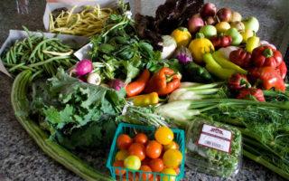 Το να καλλιεργείς την τροφή σου είναι σαν έχεις δικά σου «λεφτά»
