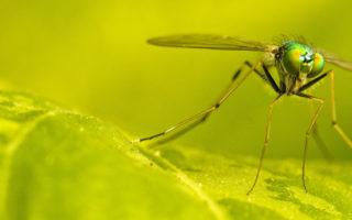 Αυτό είναι το ΚΟΛΠΟ για να μην σας τσιμπήσουν τα κουνούπια!
