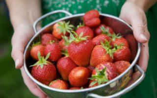 Φυτεύω φράουλες στο μπαλκόνι μου