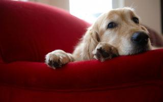 Τι δείχνουν οι έρευνες για τα σπίτια που έχουν σκύλο